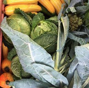 Gorgeous autumn produce