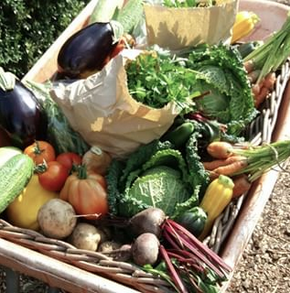 Freshly picked basket of veg - available to order